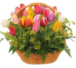 Весенняя корзина с тюльпанами
