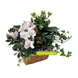 Корзинка с цветущими растениями