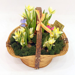 Корзинка с тюльпанми