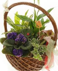 Композиция из горшечных цветов Сад в корзинке
